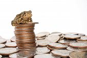 picture of scrooge  - tiny toad sitting on top of a stack of quarters - JPG
