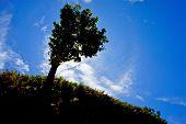 Big Tree And Ferns