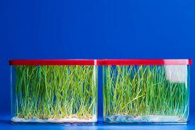 picture of modifier  - Genetically modified plants in a scientific laboratory - JPG