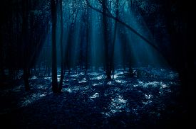 image of moonlight  - Night forest with moonlight rays - JPG