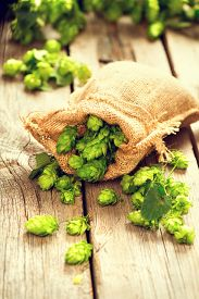 foto of brew  - Hop in bag on wooden cracked old table. Brewing. Ingredient for brewing beer. Beauty fresh-picked hop cones closeup. Sack of hops on vintage background. Alternative medicine. Beer concept  - JPG