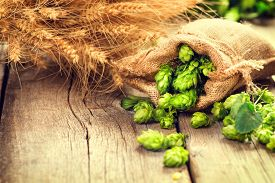 stock photo of brew  - Beer brewing ingredients Hop in bag and wheat ears on wooden cracked old table - JPG