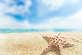 foto of shell-fishes  - Starfish Shell Isolated Conch Shell Beach Fish White - JPG