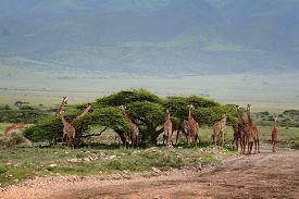 foto of herbivore animal  - Herd wild herbivorous cloven - JPG