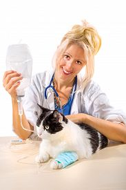 image of sick kidney  - Veterinarian woman doctor making infusion therapy to a senior cat suffering from kidney failure - JPG
