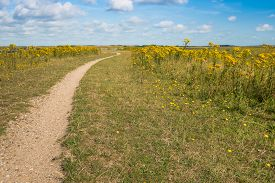 picture of grass area  - Small winding path in a nature area with grasses and yellow flowering wild plants - JPG