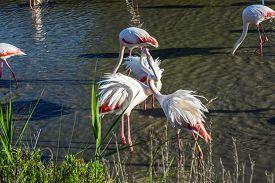 picture of pink flamingos  - Love pink flamingos - JPG