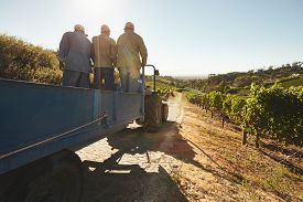 picture of wagon  - People riding in a tractor wagon through grape farms - JPG
