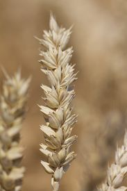 stock photo of carbohydrate  - Macro photography of the grain - JPG