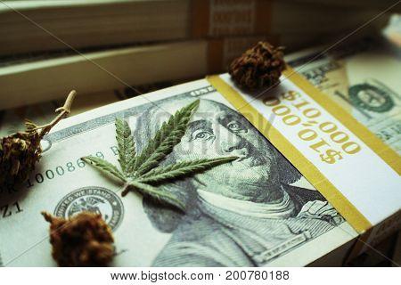 Marijuana Profits With