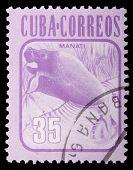 Cuba - por volta de 1981: Um centavo de 35 selo impresso em Cuba mostra A Manatee (manati, Trichechus Manatus),