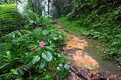 Rainforest Path - Puerto Rico
