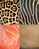 Abstract Africa Animal Pattern Texture Of Skin, Fur And Feathers