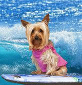 The surfer pup