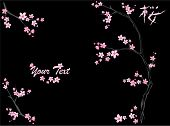 stock photo of cherry blossom  - black background with blooming tree branches and Japanese hieroglyph meaning  - JPG