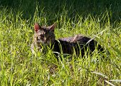 In the Garden,  domestic cat on a field. Rural scene poster