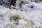 Paddle In Fishermans Nightmare