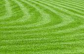 a huge green lawn