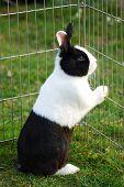Hare Locked Up