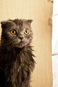 gatito es mojado
