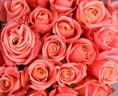 A huge bouquet of pink roses. pink roses background. pink roses horizontal seamless pattern.    poster