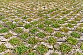 Flagstones With Green Grasses Patern