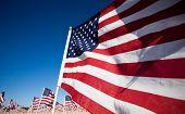 Постер, плакат: Большая группа американских флагов празднования национальный праздник День ветеранов день независимости 911