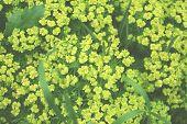 Background Of A Green Grass. Green Grass Texture Green Grass Texture poster