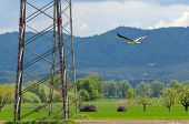 Large White Bird With Black Wing Feathers Flying Over Green Countryside In Spring In Mountainous Ter poster