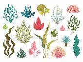 Seaweeds. Underwater Ocean Plants, Sea Coral Elements, Hand Drawn Ocean Flourish Algae, Cartoon Deco poster