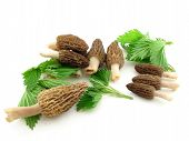 picture of morel mushroom  - Morel mushrooms and nettles isolated over white - JPG