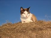 Cat On Hay Bale