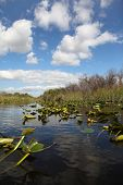 stock photo of airboat  - Ecosystem vegetation of the Everglades National Park - JPG