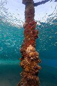 Bait Fish Swirl Around A Manmade Jetty Leg