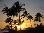 Hawaiin Sunset Silhouette With Palm Trees 1