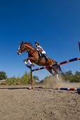 Image of  female jockey with purebred horse, jumping a hurdle. poster