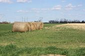 Country Haybales