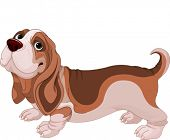 Illustration of Basset Hound breed dog