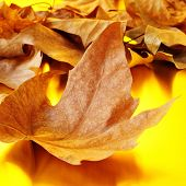 a pile of dried leaves in autumn