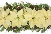 Poinsettia flower arrangement with mistletoe, cedar leaf sprigs and pine cones over white background.