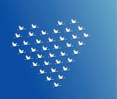 White Swans Flying Or Geese Flying Or Crane Flying In The Shape Of Heart Against Blue Sky Background