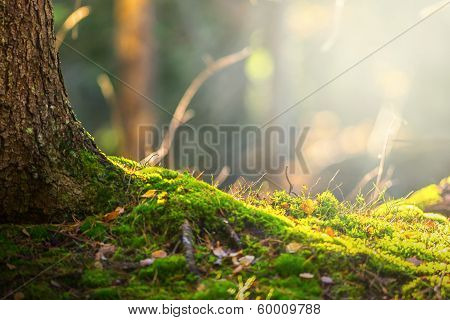 Forest Floor In Autumn With Ray Of Light poster