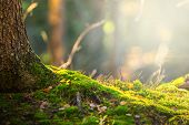 image of birching  - Forest floor in autumn with ray of light and green moss - JPG