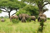picture of baobab  - Wildlife Elephants famili in safari in Africa - JPG