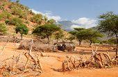 Africa Village
