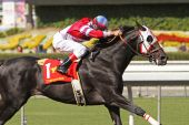 Bold Chieftain Wins The 2009 California Cup Classic