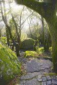 Forest Landscape In Penha In Guimaraes, Portugal, Europe