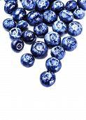 Fresh Blueberries Isolated On White Background Close Up. Blueberry Antioxidant Superfood Isolated On