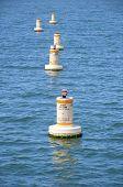 Sono buoys