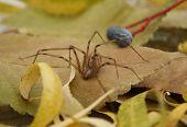 Giant Spider On Leaf